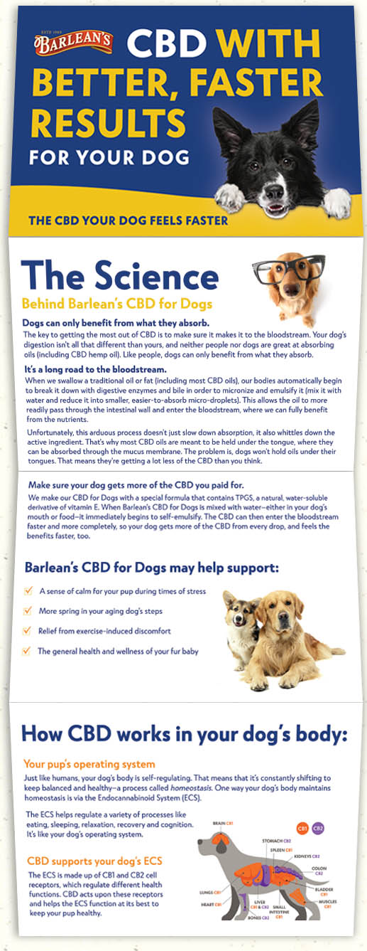 CBD for Dogs Brochure Web