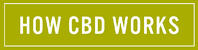 How CBD works Green button