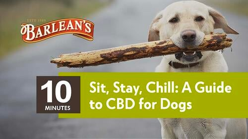 CBD for Dogs Thumbnail